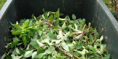Późniejszy odbiór odpadów zielonych i biodegradowalnych z rejonu 4 i 5 w Wołominie.