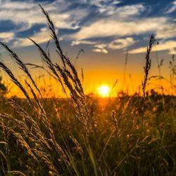 Konkurs fotograficzny Krajowego Ośrodka Wsparcia Rolnictwa