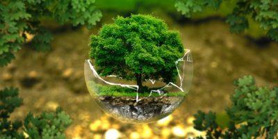 Konkurs Chroń naturę – nic wielkiego zrób dla Ziemi coś dobrego