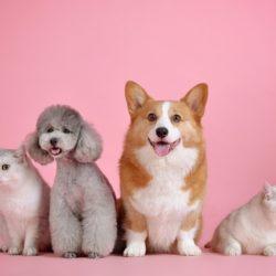 Bezpłatna sterylizacja psów i kotów w 2019 r.