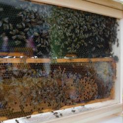 """Wołomin rozkwita – otwarcie """"Wołomińskiej stołówki dla pszczół"""""""