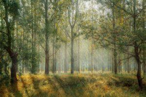 Wyłożenie uproszczonych planów urządzania lasów