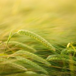 Rozwój przedsiębiorczości - rozwój usług rolniczych