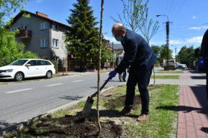 30 drzew na #30latSamorządu