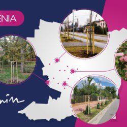 grafika z podsumowaniem nasadzeń w gminie Wołomin