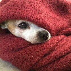 zmarznięty pies