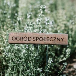 """zdjęcie przedstawiające tymianek z tabliczką """"ogród spoleczny"""""""