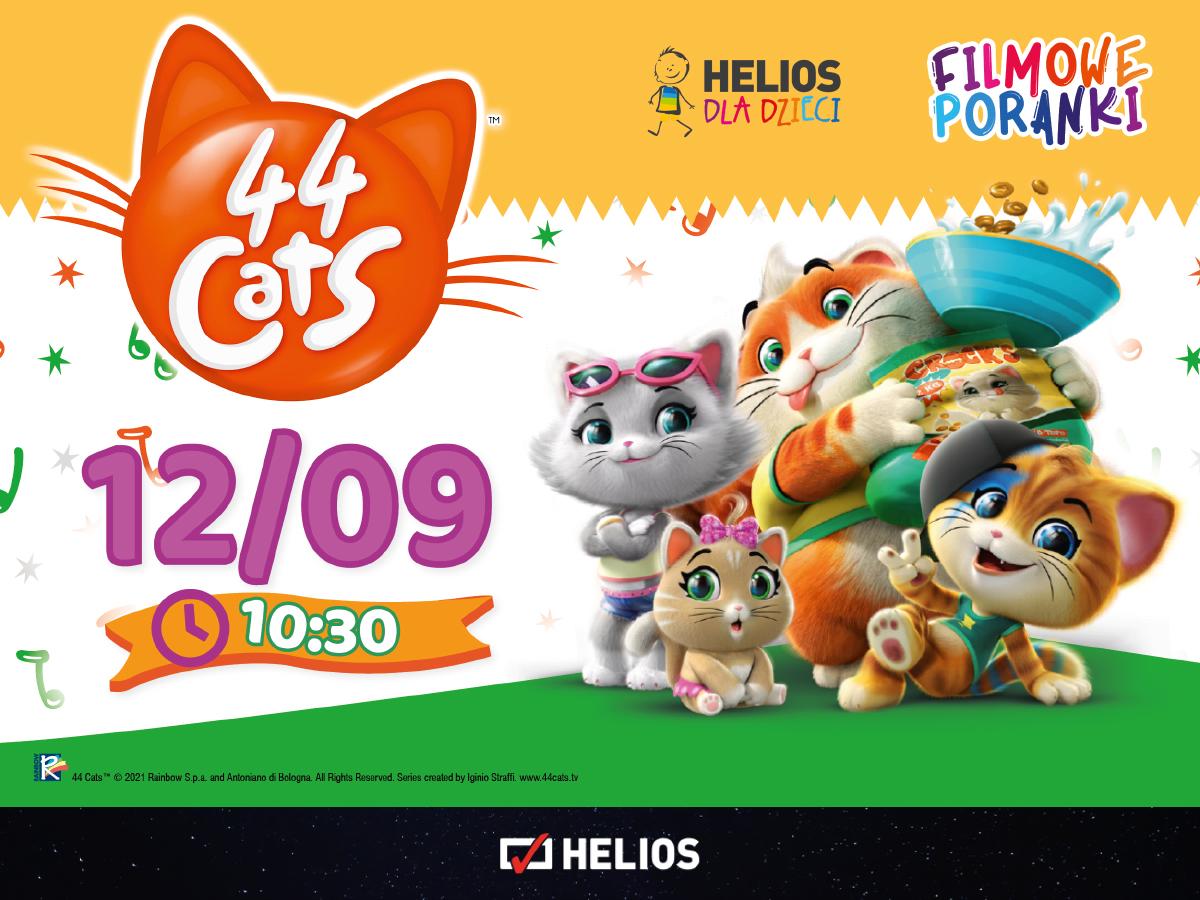 film koty